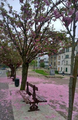 Cerisiers3